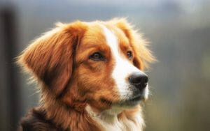Darmflora hond herstellen